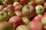 Then the apples, their rosy cheeks signal our season's finest.